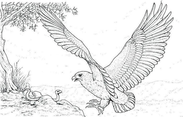 Eagles Coloring Pages Pdf