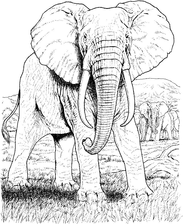 Easy Abstract Elephant Coloring Pages For Adults