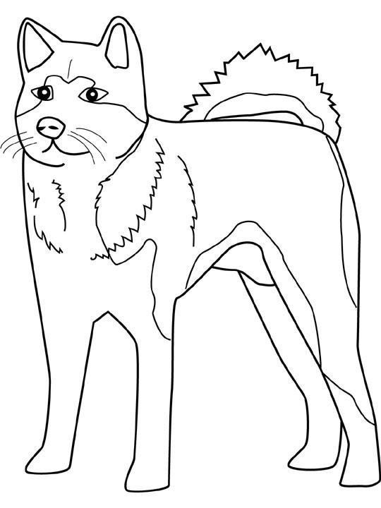 Easy Realistic Husky Coloring Pages