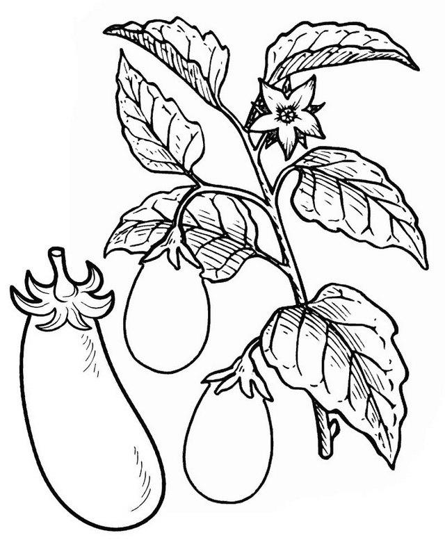 Eggplant Tree Vegetable Coloring Page