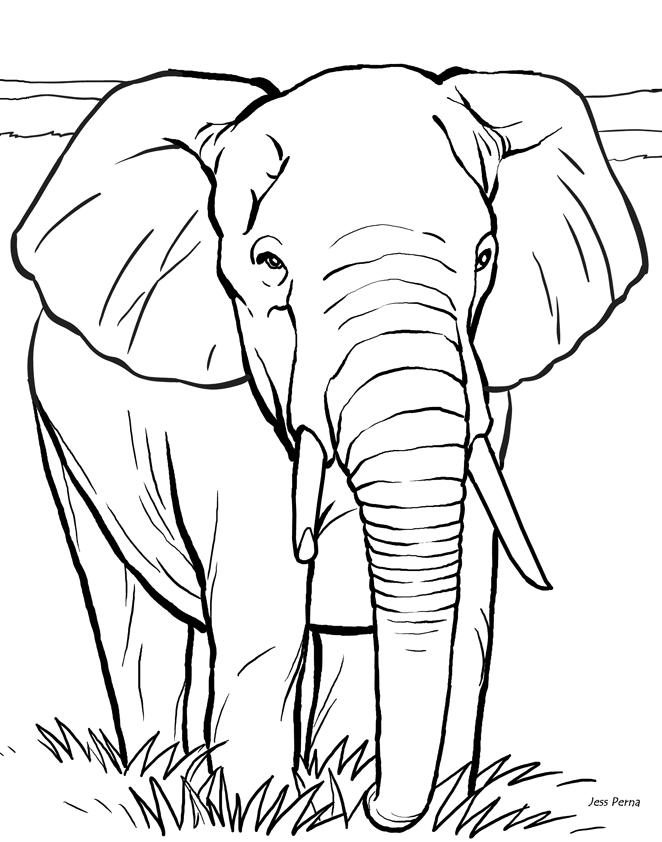 Elephant Coloring Pages 7