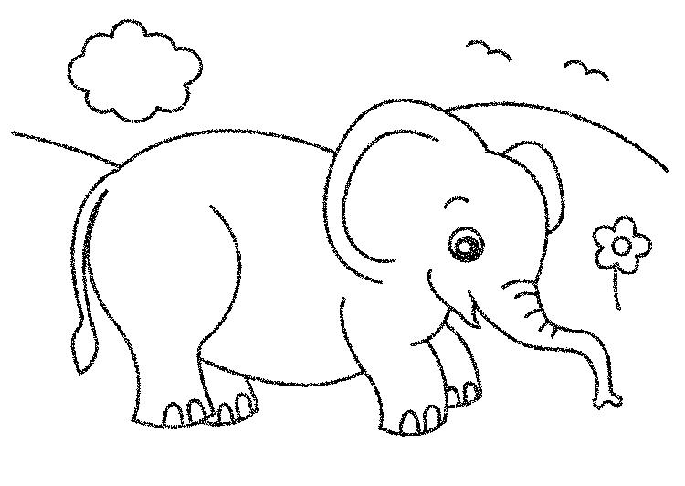 Elephant Coloring Pages In Field