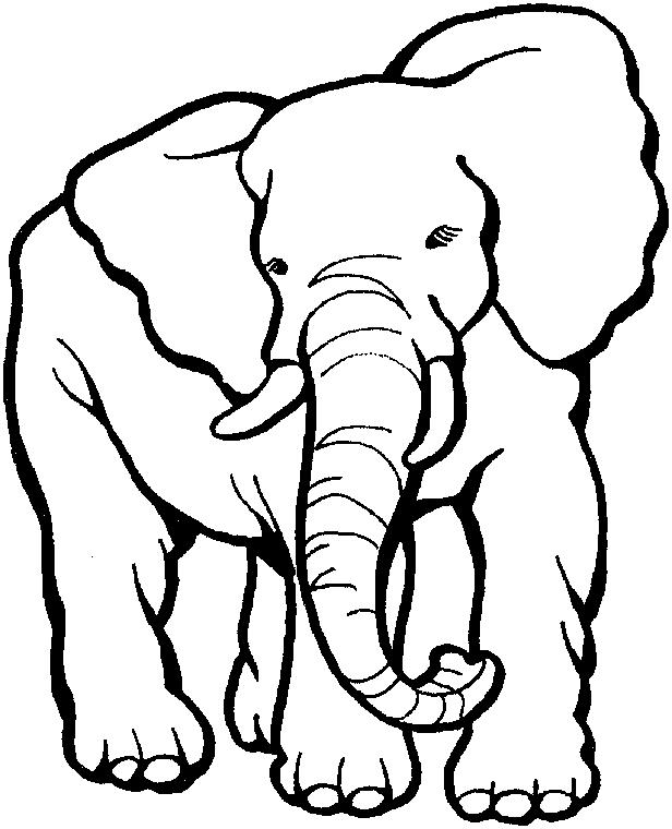 Elephant Coloring Pages Printable Animals