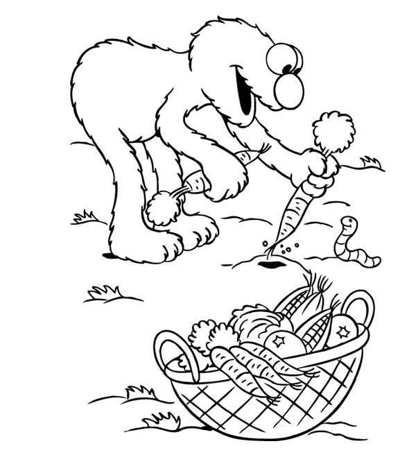 Elmo Harvest Carrot In Gardening Coloring Pages