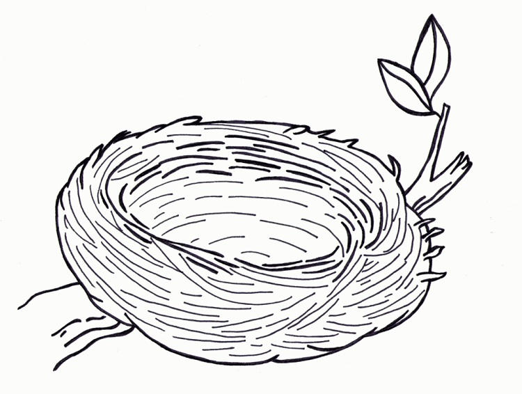 Empty Birds Nest Coloring Page
