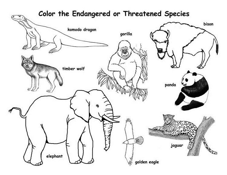 Endangered Animal Coloring Pages