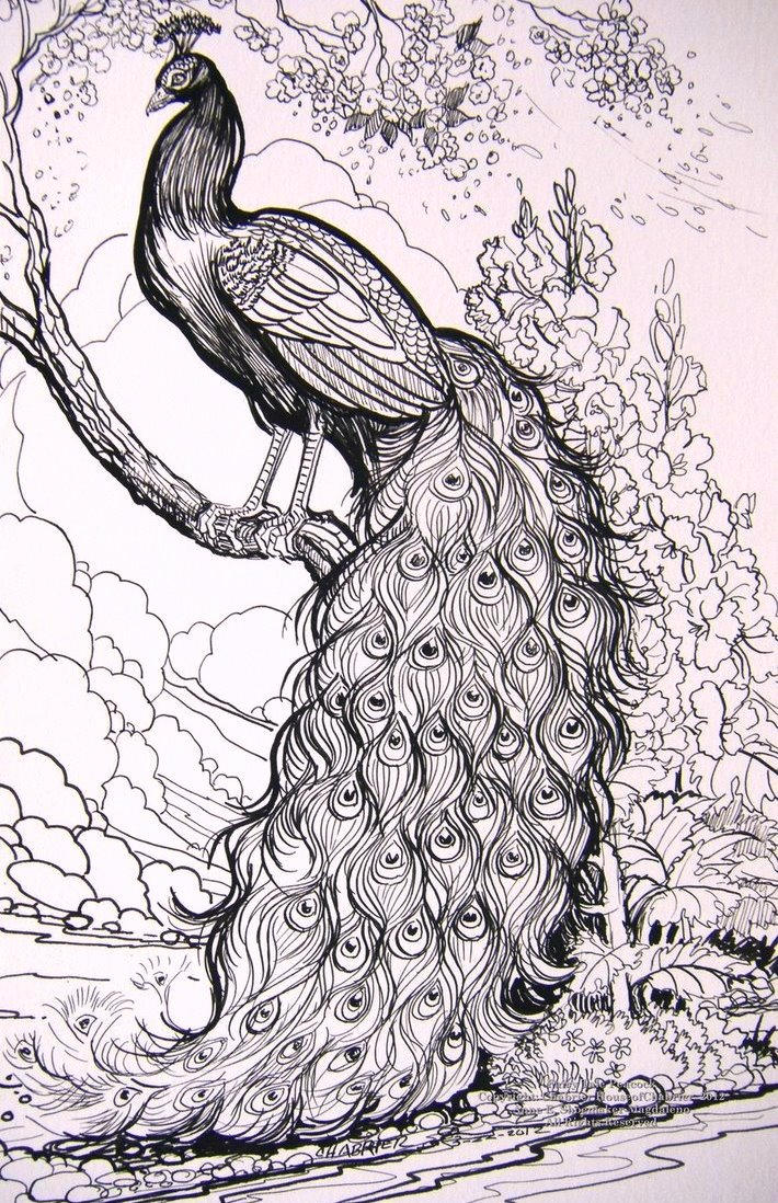 Fairy Tale Peacock Coloring Pages