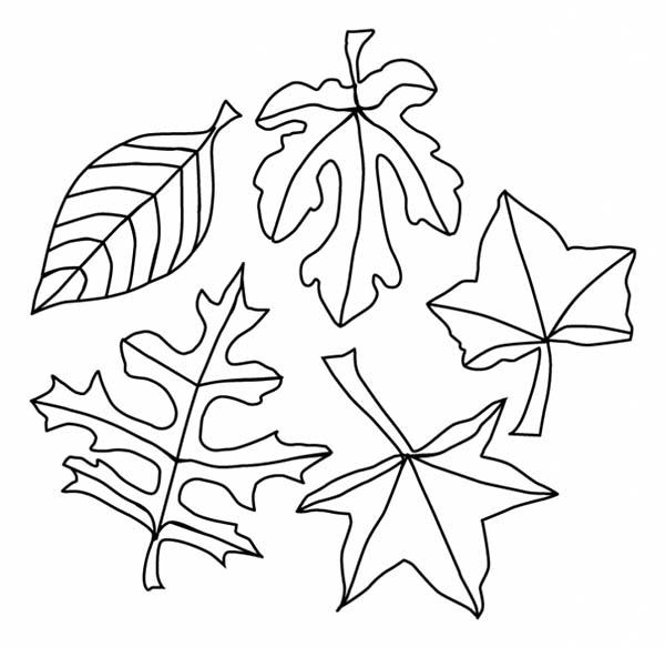 Fall Season Leaves Coloring Pages