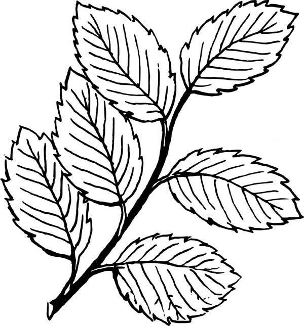 Falling Leaves Image Coloring Pages