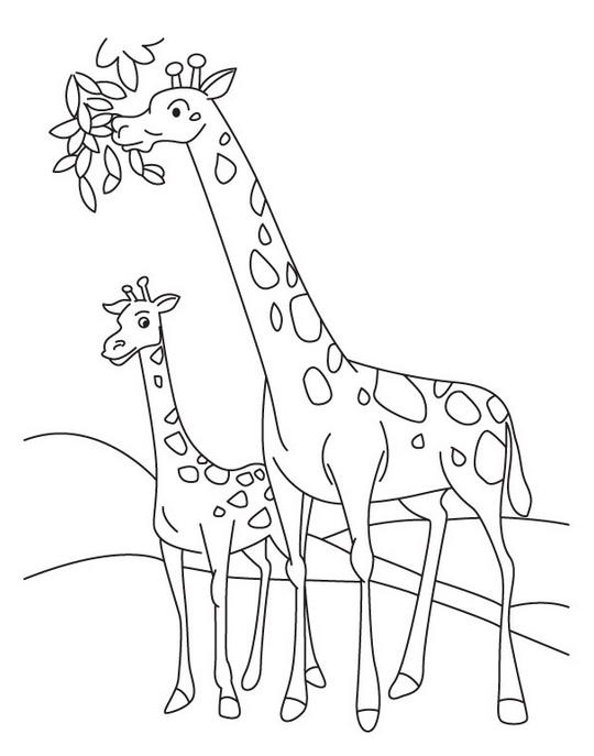 Family Giraffe Coloring Pages