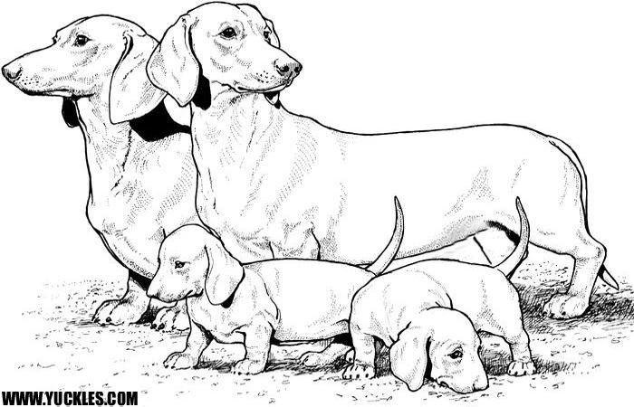 Family Siberian Realistic Husky Coloring Pages