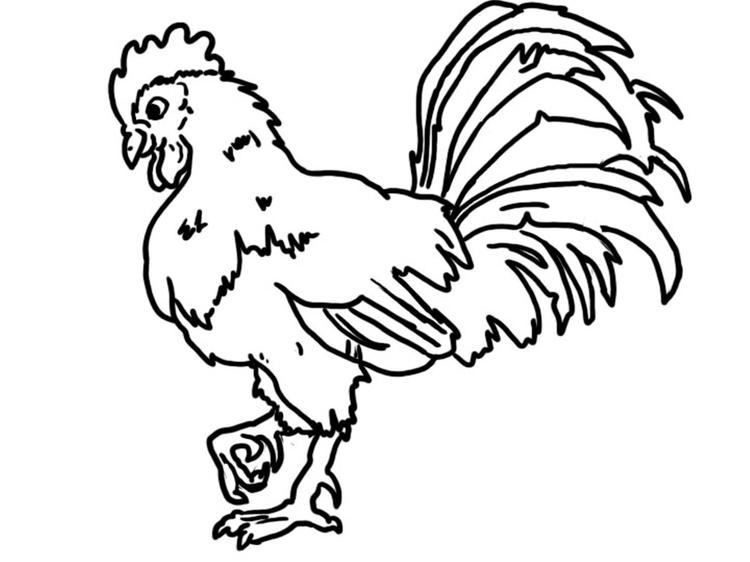 Farm animal coloring pages pics