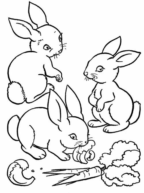 Farm Animal Coloring Pages Rabbits