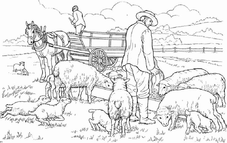 Farm Life Coloring Pages Sheeps Heeding
