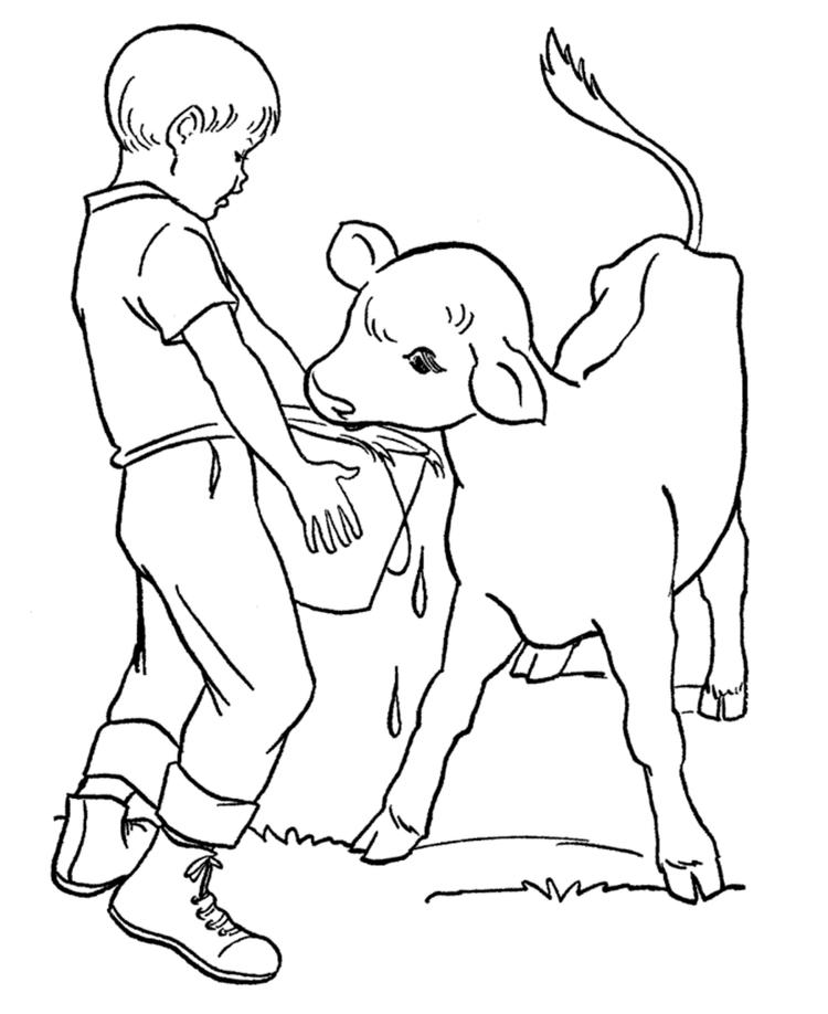 Feeds The Calf Farm Animal Coloring Pages
