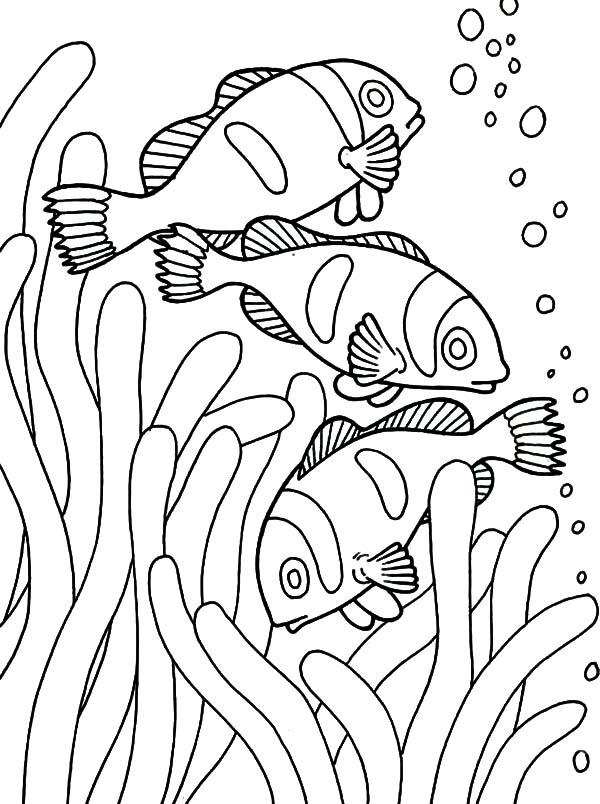 Fish Coloring Pages Clown Fish In Anemone