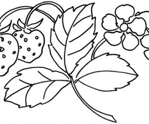 Flower and strawberry fruit coloring pages