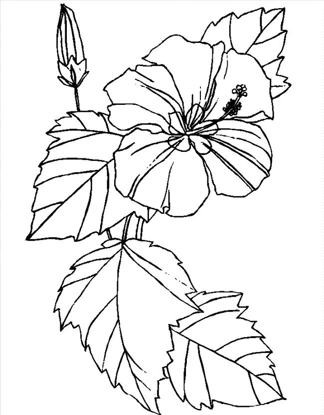 Flower Coloring Pages Hibiscus