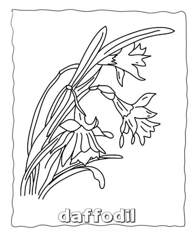 Flowers Coloring Pages Daffodils1