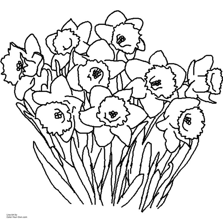 Flowers Coloring Pages Free Flowers Coloring Pages