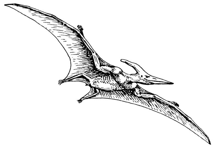 Flying Dinosaurs Coloring Pages For Children