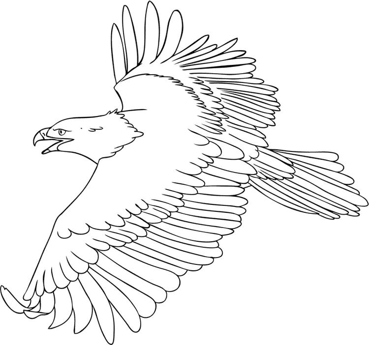 Flying Eagle Coloring Pages Wingspan