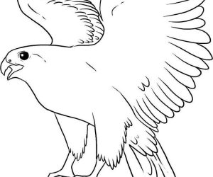 Flying falcon bird coloring pages