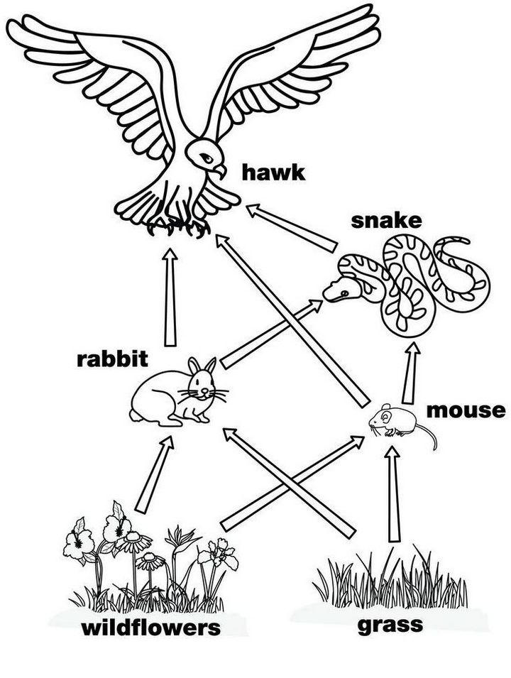 Food Web Simple Coloring Page