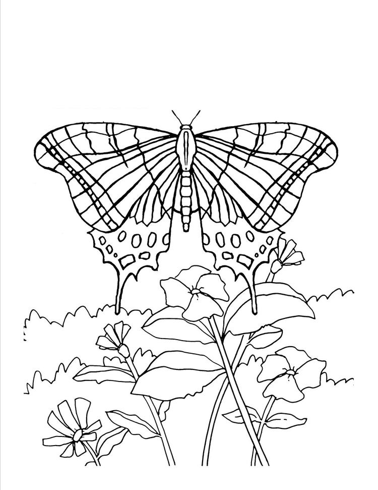 Free Adult Coloring Pages Printable Butterfly 1