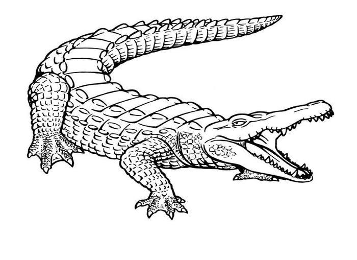Free Alligator Coloring Pages