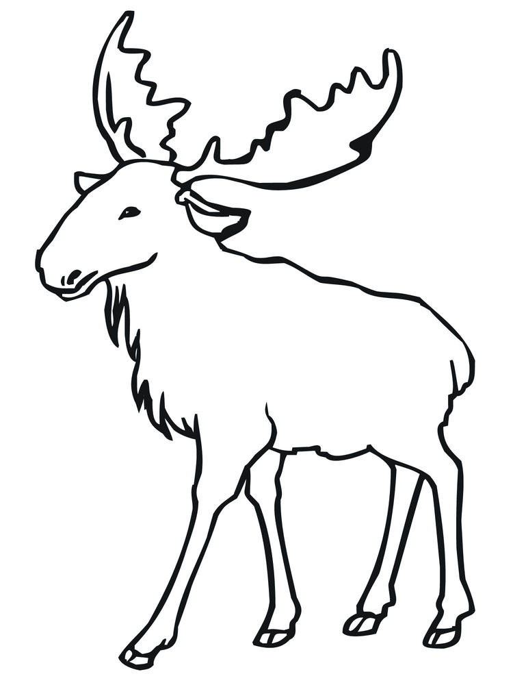 Free Animal Coloring Pages Printable