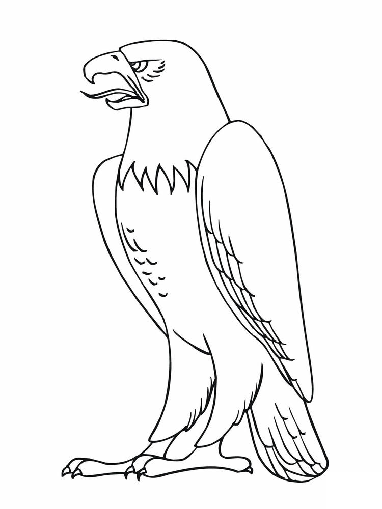 Free Bald Eagle Coloring Pages For Kids