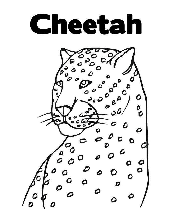 Free Coloring Pages Of A Cheetah