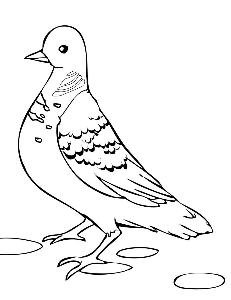 Free Dove Bird Coloring Page