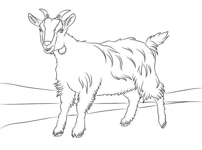 Free Goat Coloring Pages