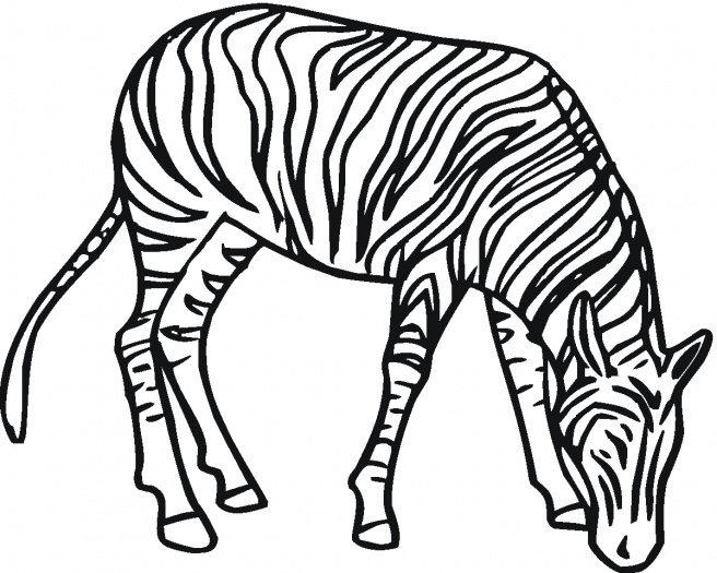 Free Preschool Coloring Pages Zebra