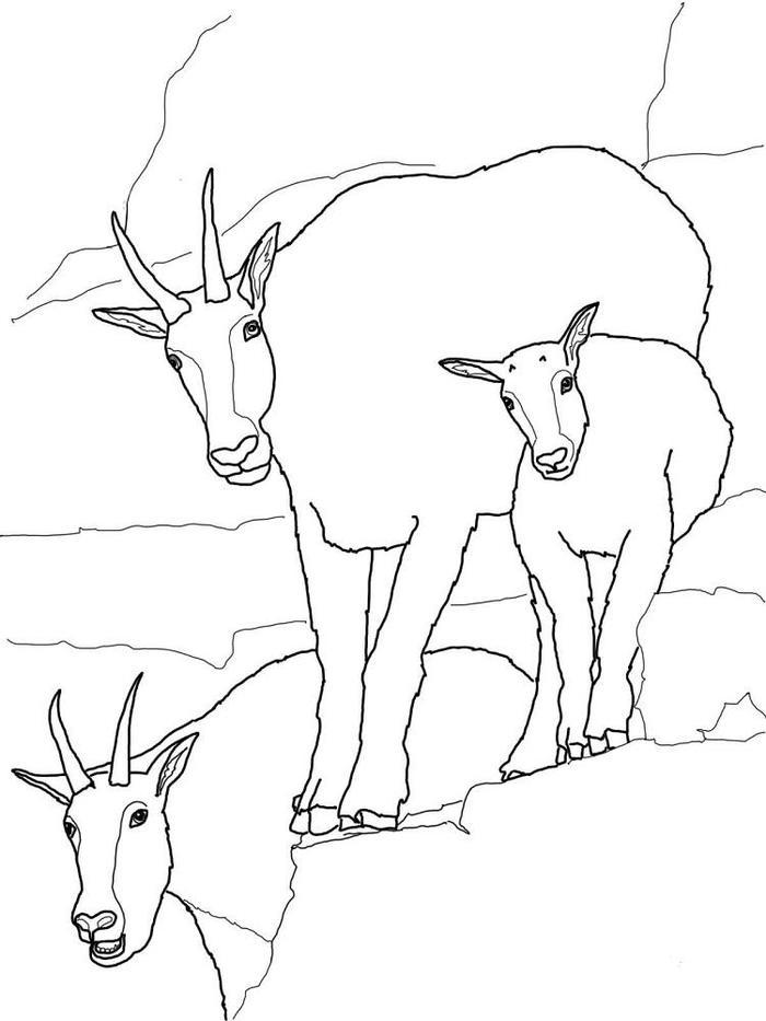 Free Printabale Goat Coloring Pages