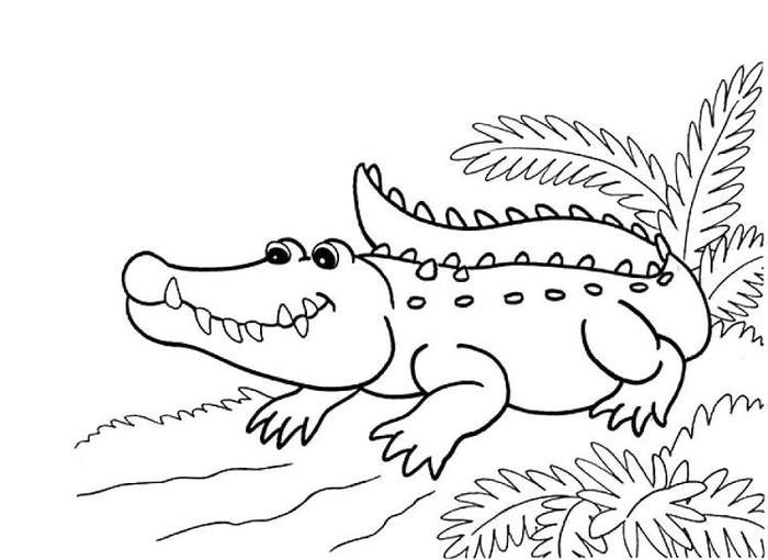 Free Printable Alligator Coloring Pages