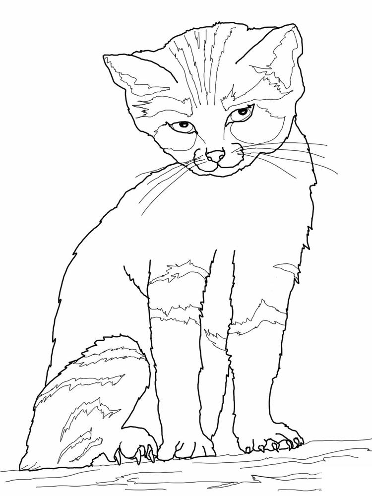 Free Printable Cat Coloring Pages For Kids 1