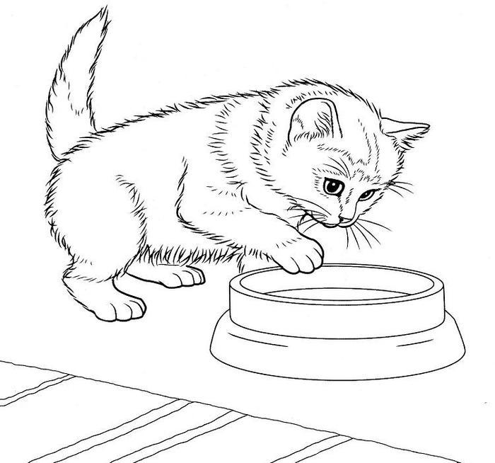 Free Printable Kittens Coloring Pages