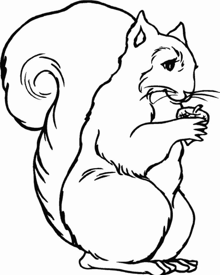 Free Printable Squirrel Coloring Pages