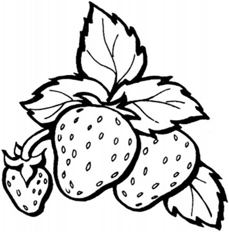 Free Printable Strawberry Fruit Coloring Pages