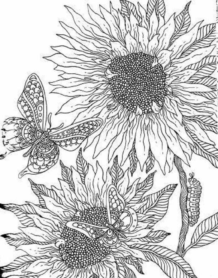 Free Printable Sunflower Coloring Pages
