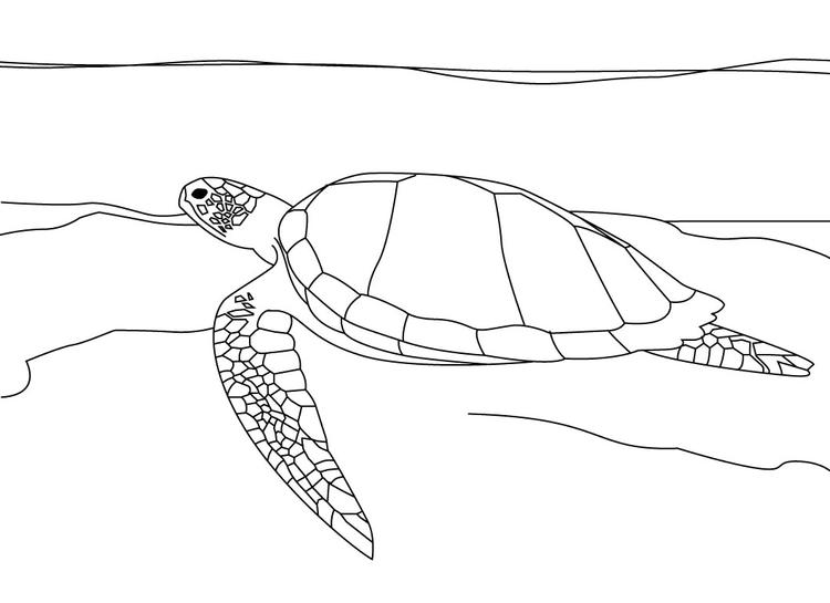 Free Sea Turtle Coloring Pages For Kids