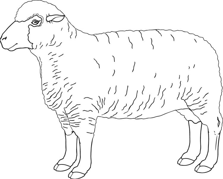 Free Sheep Coloring Pages To Print
