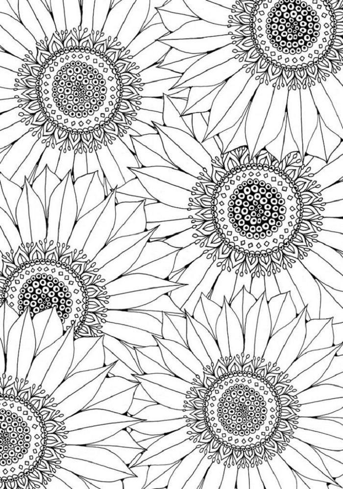 Free Sunflower Coloring Pages