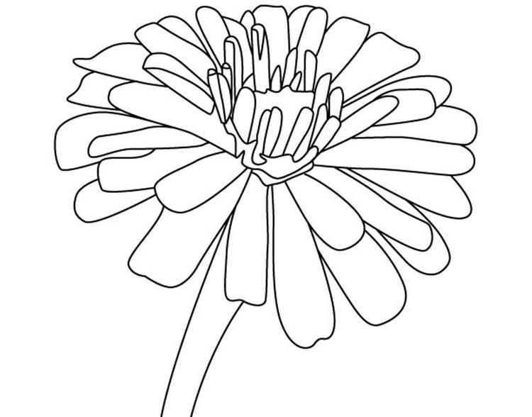 Free Zinnia Flower Coloring Page