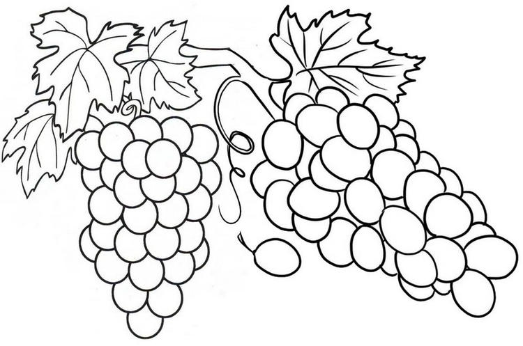 Fresh Grape Coloring Page For Kids
