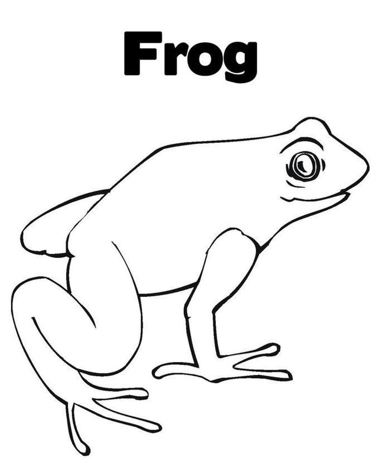 Frog Coloring Page Free