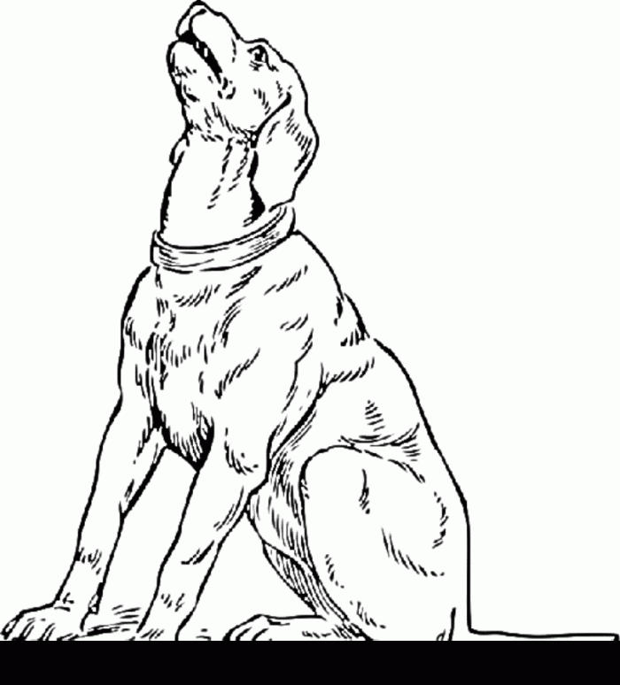 Funny Realistic Dog Coloring Pages 1
